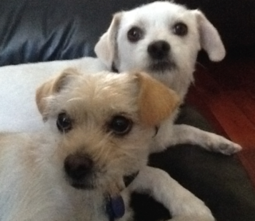 Albert's Dogs